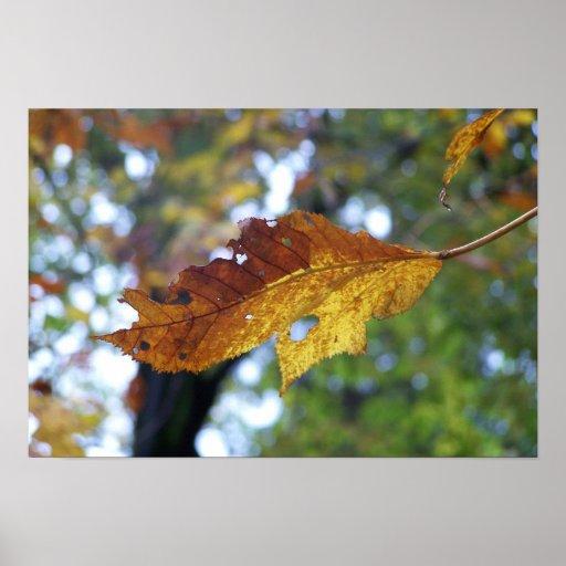 Broken Leaf Poster