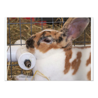 "Broken tri color mini rex rabbit head on waterer 5"" x 7"" invitation card"