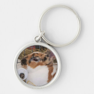 Broken tri color mini rex rabbit head on waterer key chain