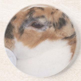 Broken tri color mini rex rabbit head on waterer sandstone coaster