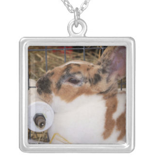 Broken tri color mini rex rabbit head on waterer silver plated necklace