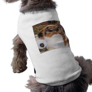 Broken tri color mini rex rabbit head on waterer T-Shirt