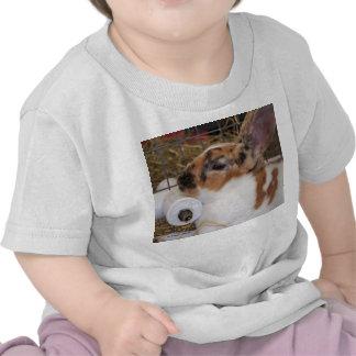 Broken tri color mini rex rabbit head on waterer shirts