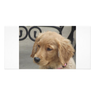 Brokentoptop Goldens  Puppy note cards