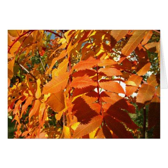 BROL Bright Orange Leaves Card