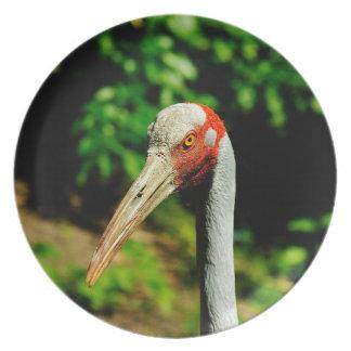 Brolga bird portrait melamine plate