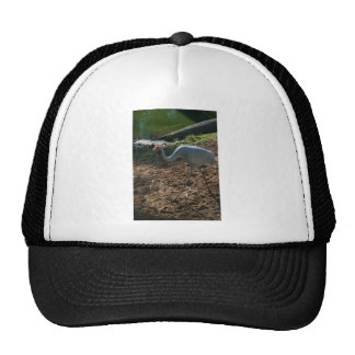 Brolga Walks With Bent Neck And Beak Pointing Down Trucker Hat