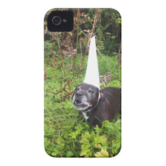 Broma del unicornio de Norfolk desenmascarada iPhone 4 Cobertura