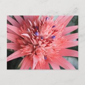 Bromelia postcard