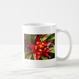 bromeliad 2 coffee mug