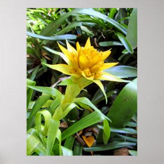 Bromeliad amarillo póster