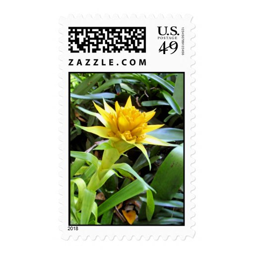 Bromeliad amarillo sello