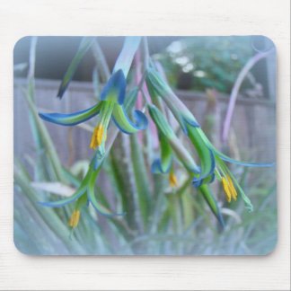 Bromeliad Blossoms on Blue Mouse Pad