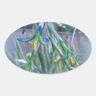 Bromeliad Blossoms on Blue Oval Sticker