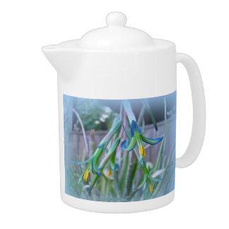 Bromeliad Blossoms on Blue