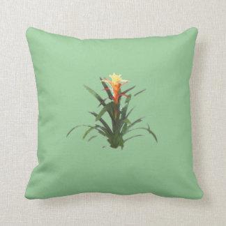 Bromeliad con una flor cojín