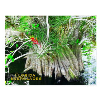 Bromeliad en el mangle, marismas de la Florida Tarjetas Postales