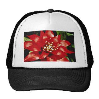 Bromeliad  flowers hat