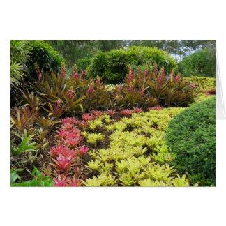 Bromeliad Gardens Card