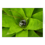 Bromeliad Green Nature Botanical Photography Card