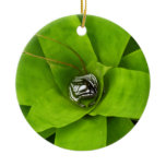 Bromeliad Green Nature Botanical Photography Ceramic Ornament