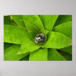 Bromeliad Green Nature Botanical Photography Poster