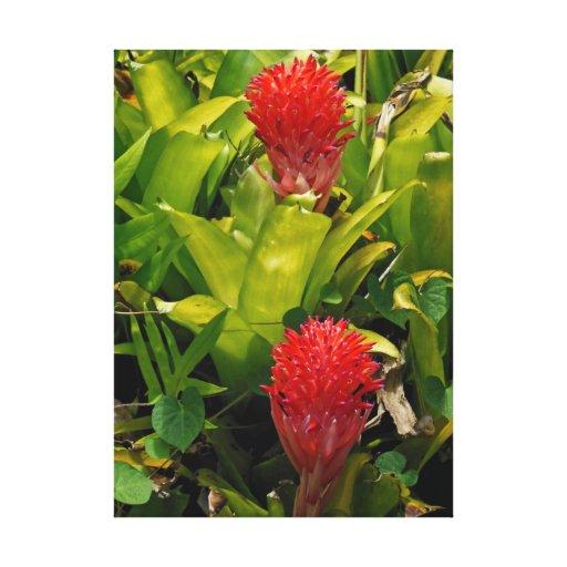 Bromeliad hawaiano impresiones de lienzo