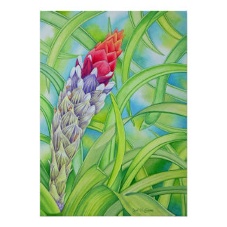 Bromeliad hawaiano poster