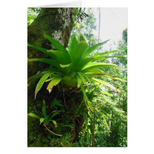 Bromeliad hawaiano tarjeton