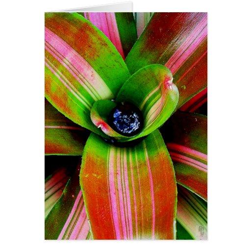 Bromeliad heart greeting card