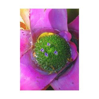 Bromeliad Impresión En Lienzo Estirada