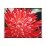 Bromeliad Impresión En Lona