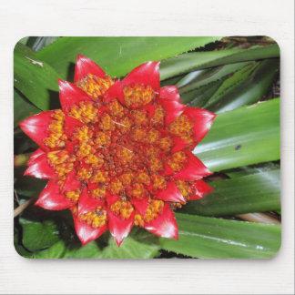Bromeliad Mouse Pad