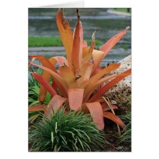 Bromeliad orange leaf plant cards