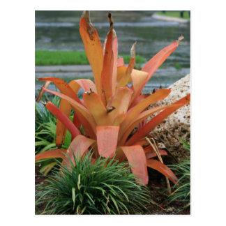 Bromeliad orange leaf plant post card