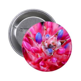 Bromeliad Pin Redondo 5 Cm