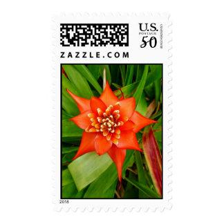 Bromeliad Postage