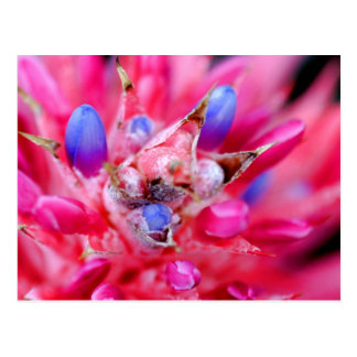 Bromeliad Postcard