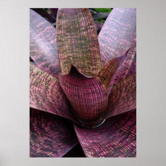 Bromeliad Póster