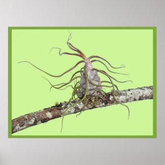Bromeliad prehistórico posters
