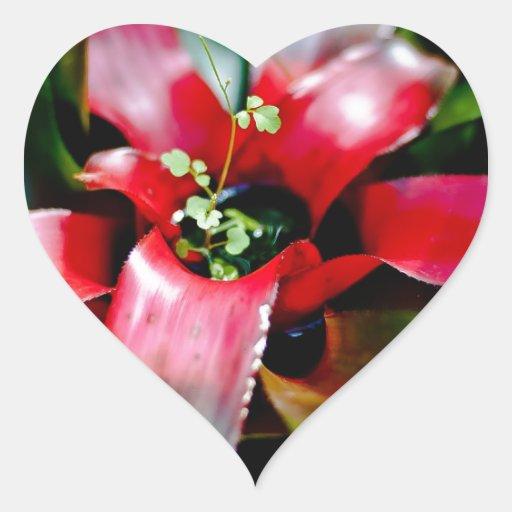 Bromeliad rojo calcomania corazon personalizadas