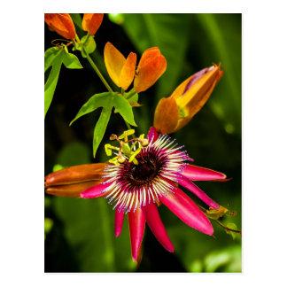 Bromeliad rojo colgante tarjeta postal