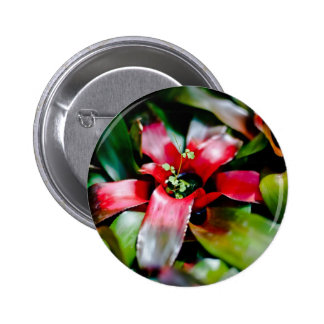 Bromeliad rojo pin