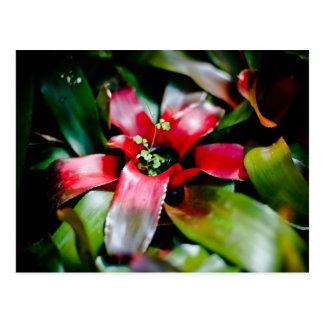 Bromeliad rojo postal
