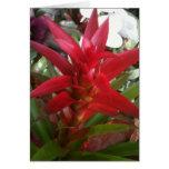Bromeliad, rojo tarjetón
