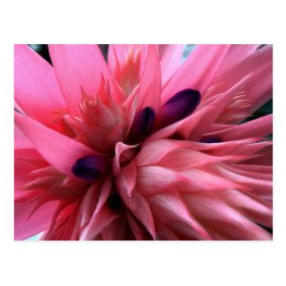 Bromeliad rosado brillante tarjetas postales