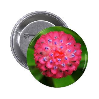 Bromeliad rosado pin