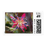 Bromeliad Stamps