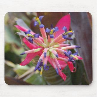 Bromeliad Alfombrillas De Raton