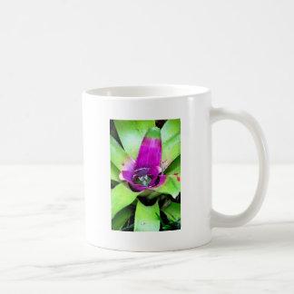 Bromeliad Taza Clásica
